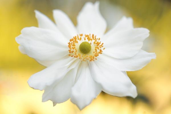 anemone-g1ddcc1aee_1920