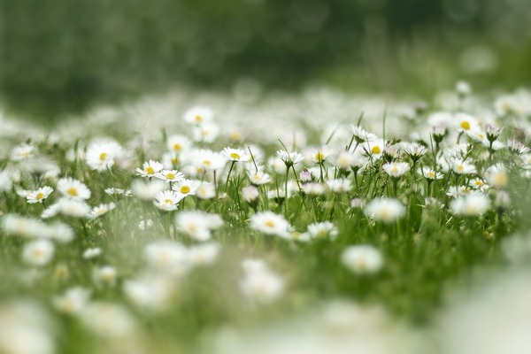 flower-meadow-4999277_1920