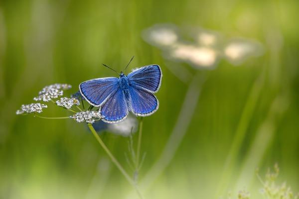 mazarine-blue-6405362_1920