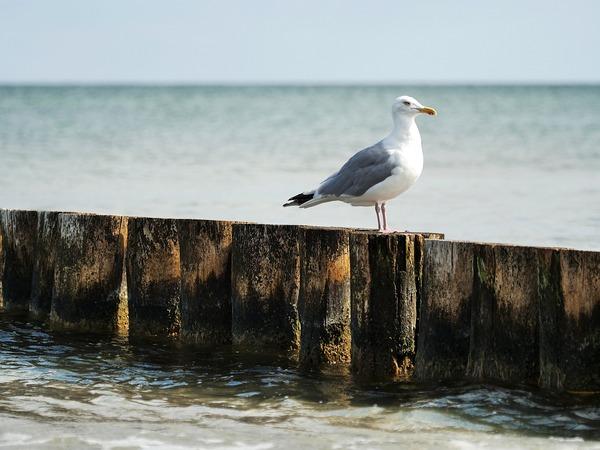 seagull-6542951_1920