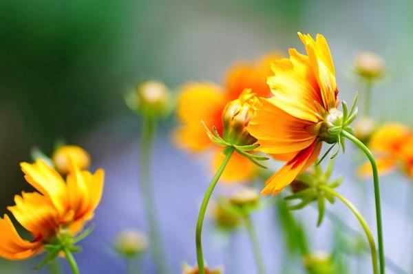 flower-5426944_1920