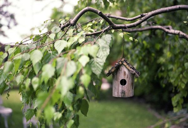bird-feeder-2344414_1920