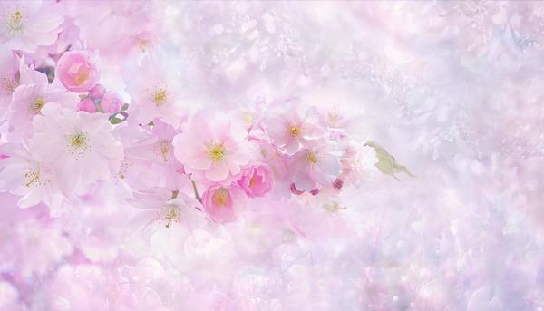 cherry-blossom-3054799_1920