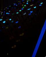 オーロラコレクション紫外線下の蛍光色クローズアップ