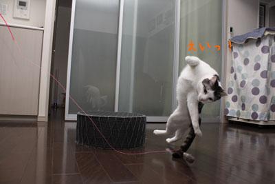 空飛ぶ猫2