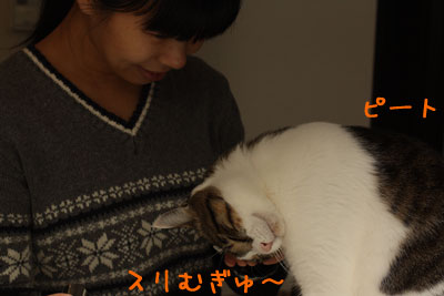猫が好きなもの3
