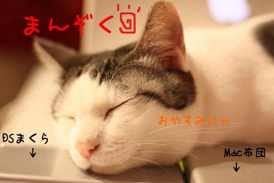 こたつとPCと猫2