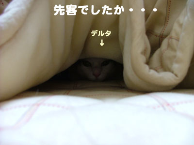 こたつと猫4