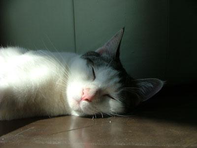 デルタ寝顔