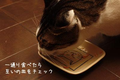 猫ごはん3