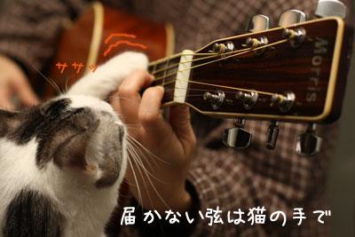 ギター猫2