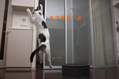 空飛ぶ猫4