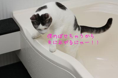 ねこ入浴中3