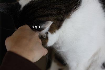 猫ピートの愛情4