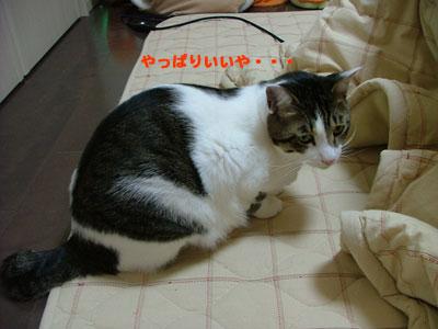 こたつと猫3