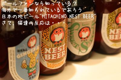 ネストビール1
