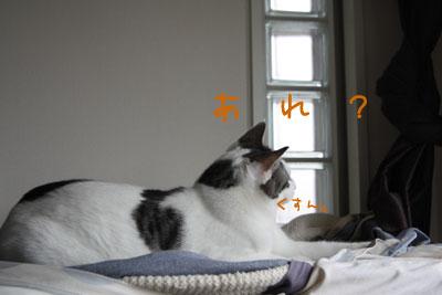 甘えん坊猫4