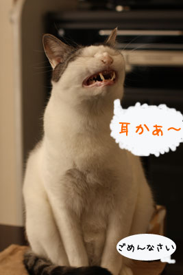 猫ホットケーキは3
