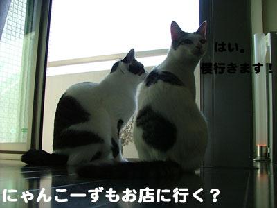 猫の日だね3
