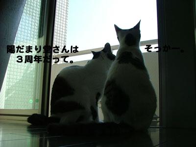 猫の日だね2