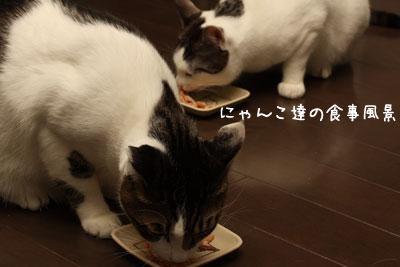 猫ごはん1