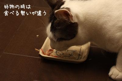 猫ごはん2