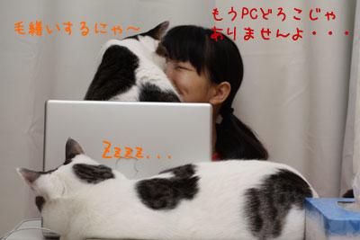 こたつとPCと猫3