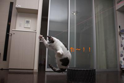 空飛ぶ猫1