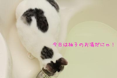 ねこ入浴中2
