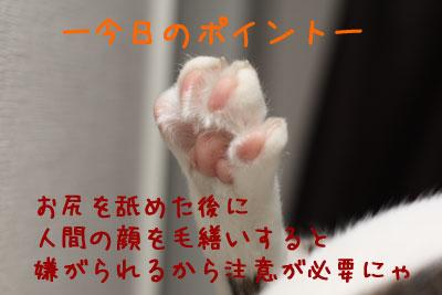 毛繕い講座6