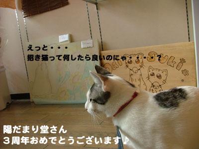 猫の日だね4