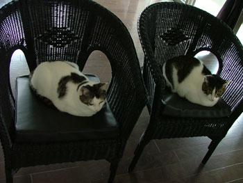 新しい椅子2脚