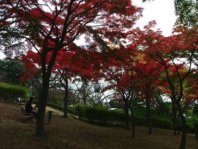 紅葉と観覧車
