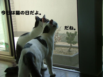 猫の日だね1