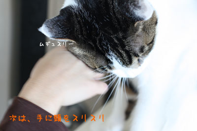 猫ピートの愛情3