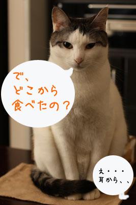 猫ホットケーキは2