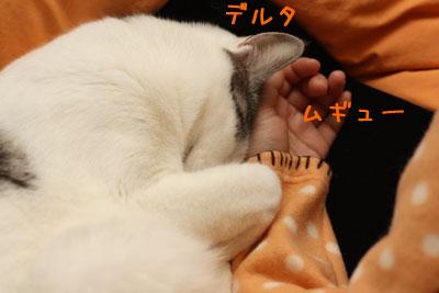 猫が好きなもの1