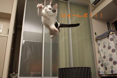 空飛ぶ猫3