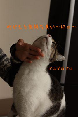 猫が好きなもの2