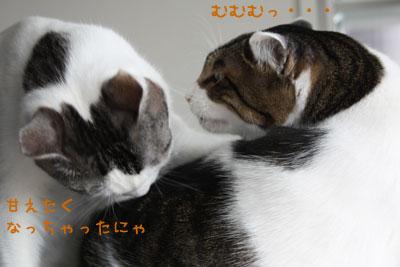 甘えん坊猫1