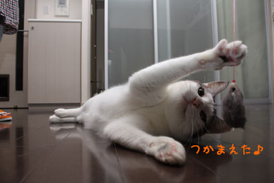 空飛ぶ猫5