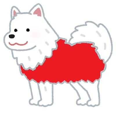 dog_samoyed