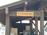 3/7河津桜まつり