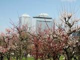 大阪城梅林とOBP(大阪ビジネスパーク)ビル群