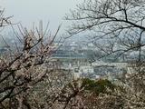 枚岡梅林からの眺望