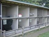 披露山公園 小動物が飼育されています