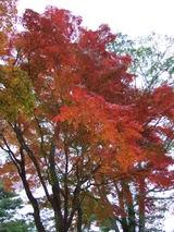 旭日丘湖畔緑地公園の紅葉