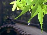 雨の妙義神社にて