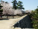 松阪城 高い石垣