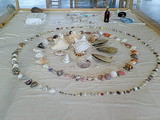 ビオスおおがた 情報館内 貝がらが展示されてました